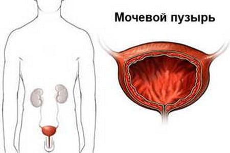 Мочевой пузырь