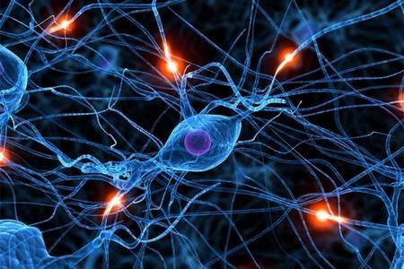 Нервная система организма