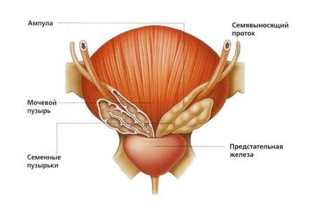 Детально о причинах, симптомах и лечении воспаления предстательной железы