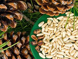 шишки и кедровые орешки