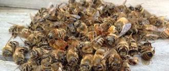 Рецепты и прием подмора пчел при лечении аденомы простаты