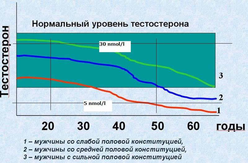 Уровень потенции по возрастам